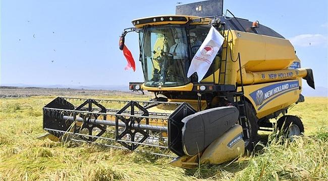 Diyarbakır'da Karacadağ pirincinin ilk hasadını gerçekleştirdi