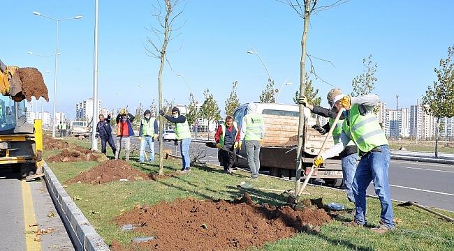 Diyarbakır'da 220 günde 5 bin ağaç dikildi
